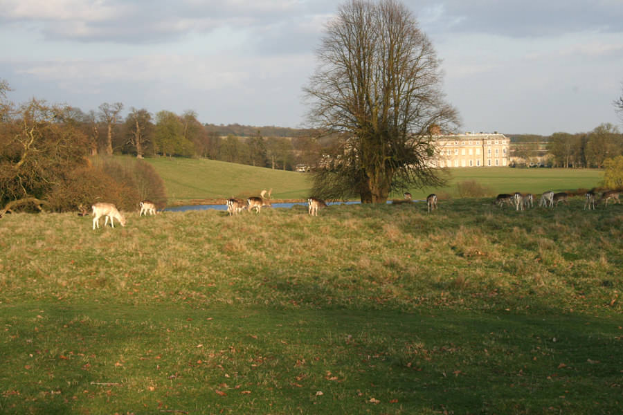 Petworth Park